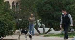 لبنان ومذبحة الكلاب الأبرياء في الغبيري بيروت